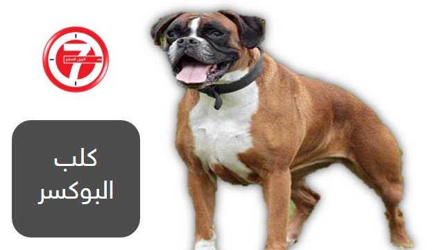 أخطر 10 كلاب عدوانية في العالم 3
